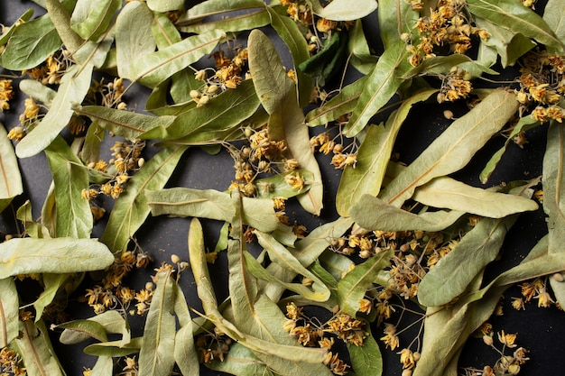 Foto ravvicinata di fiori di tiglio secchi per il tè, su sfondo nero.