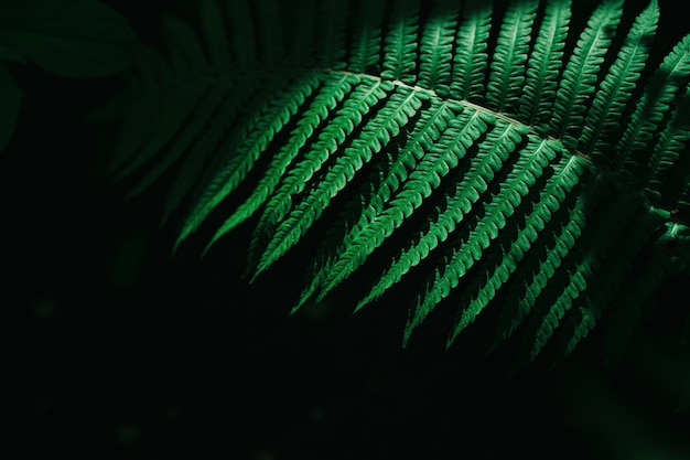 Close up foto su foglia di felce su sfondo scuro.