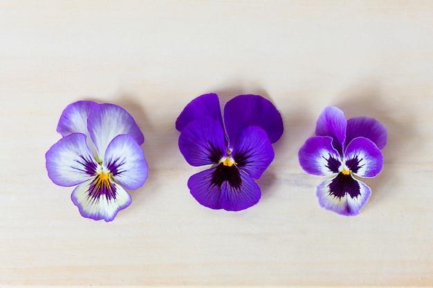 Chiuda sulla foto dei fiori porpora, viole variopinte sulla tavola di legno leggera. vista piana, vista dall'alto