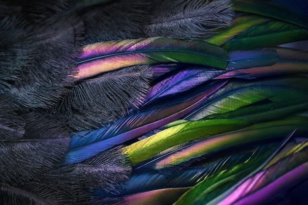Primo piano foto di piume luccicanti del paradiso degli uccelli.