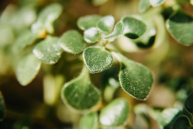 Close up foto di piante succulente nella luce del sole
