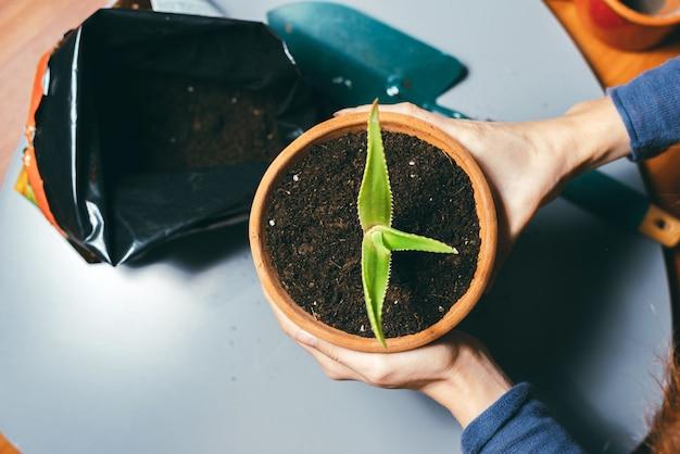 Chiuda sulla foto della donna che tiene il vaso di fiori con terreno fresco, concetto di giardinaggio. prenditi cura delle piante