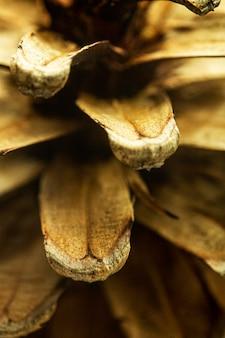 Close-up di pigna