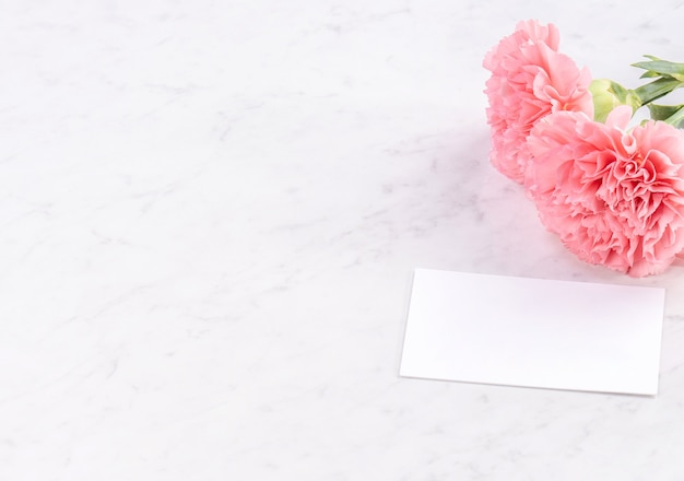 Primo piano di garofano rosa su sfondo bianco per la festa della mamma fiore