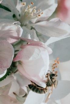 Primo piano di un fiore rosa