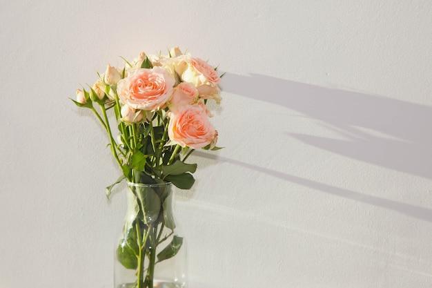 Close-up di rose rosa in vaso su sfondo bianco strutturato e ombra sul muro. spazio di copyright per il sito