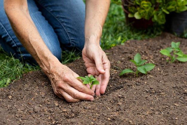 Chiuda in su piantare fiori nel terreno