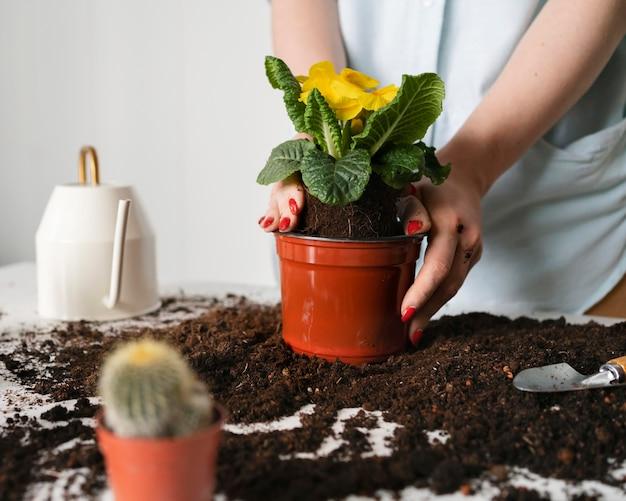 Chiuda in su piantare bulbo della pianta nel suolo