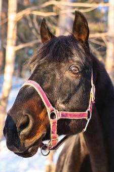 Ritratto di un bellissimo cavallo da vicino