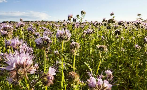 Primo piano sui fiori viola