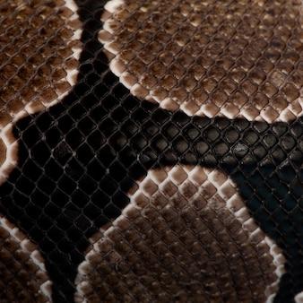 Primo piano delle scale del serpente di python regius