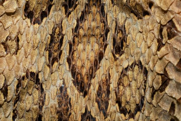 Close up vera pelle di serpente vipera per motivi animali Foto Premium