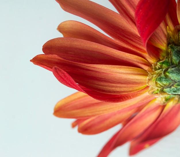 Primo piano del fiore rosso