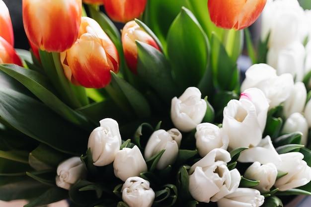 Chiuda sulla foto dei tulipani rossi e bianchi. concetto di primavera