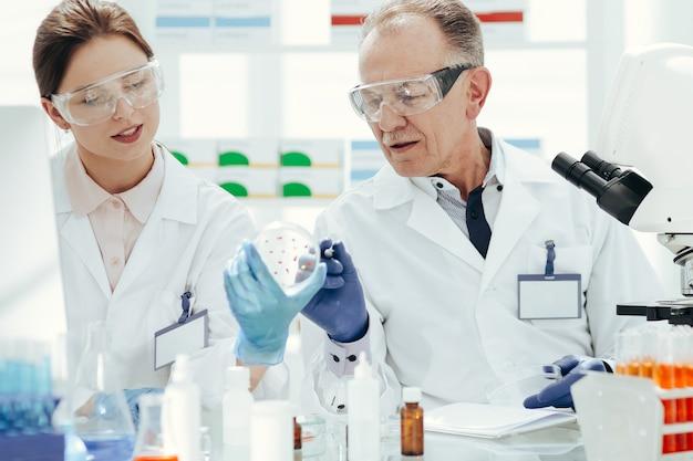 Avvicinamento. scienziati che discutono dello sviluppo di batteri in una capsula di petri. scienza e salute.