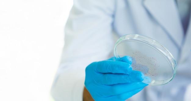 Chiudi gli scienziati che consegnano la capsula di petri con il virus della macchia rossa su sfondo bianco