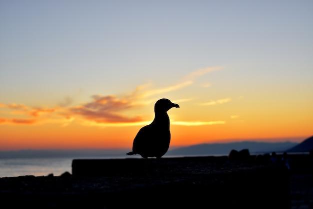 Primo piano di un gabbiano retroilluminato al tramonto