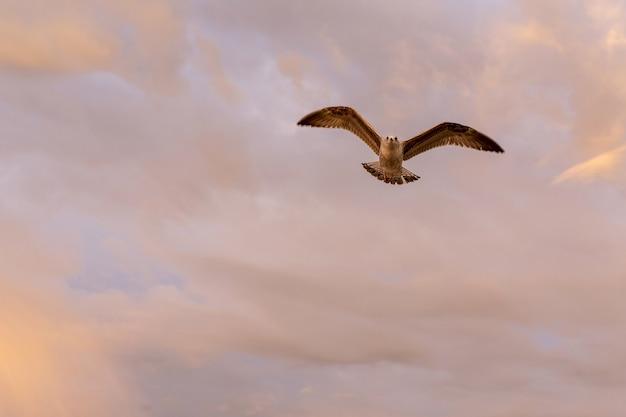 Primo piano gabbiano in volo in natura