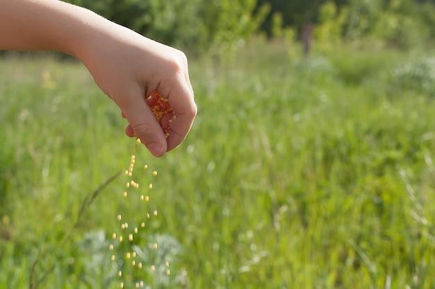 Close up senior agricoltore con semi di soia nelle sue mani.