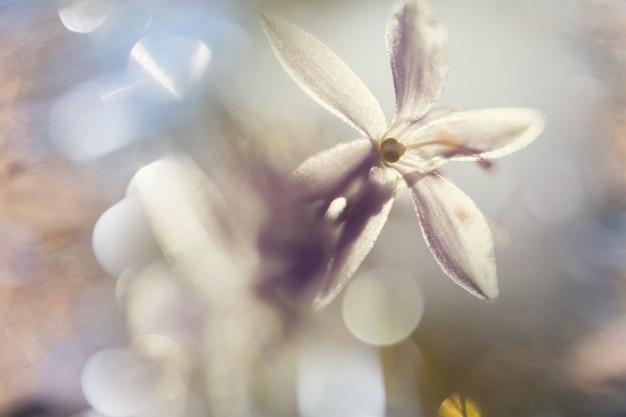 Colpo del primo piano dei bellissimi fiori. adatto per sfondo floreale.