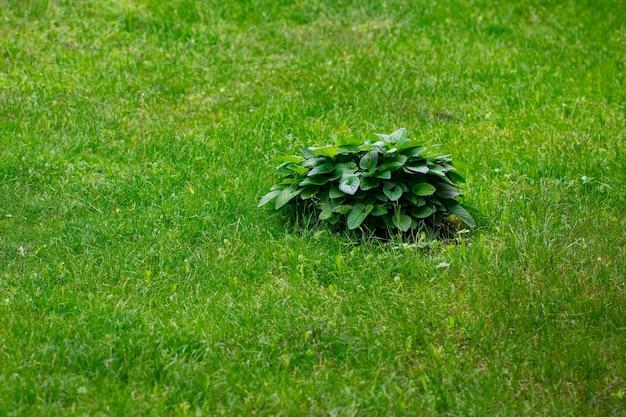 Close up arbusti e prati verdi, progettazione del paesaggio.