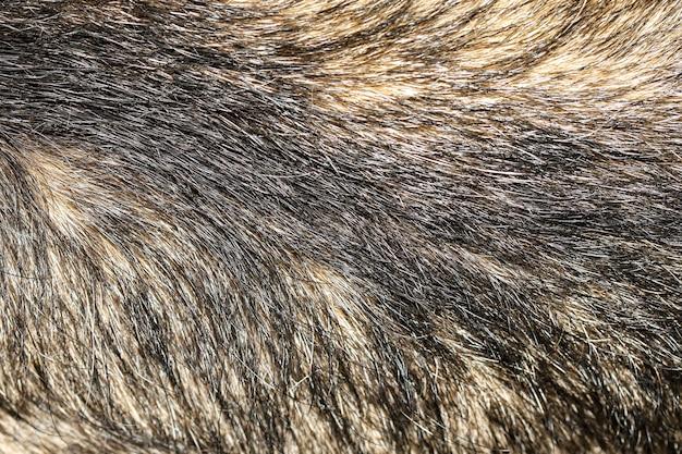 Close up pelle capelli grigio cane per sfondo texture animale
