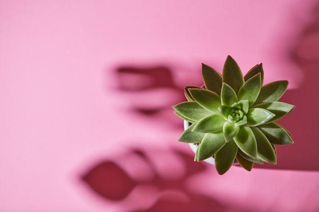 Close up di piccole succulente cactus in vaso di fiori