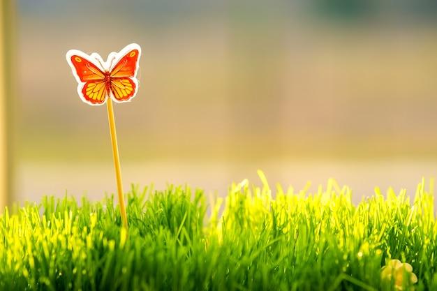 Primo piano di piccola erba verde con una piccola farfalla speciale giocattolo carino.