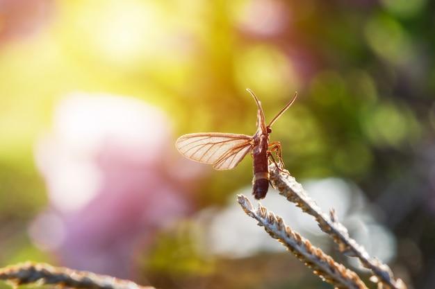 Primo piano di un piccolo insetto seduto su un fogliame con un bellissimo sfondo sfocato naturale.