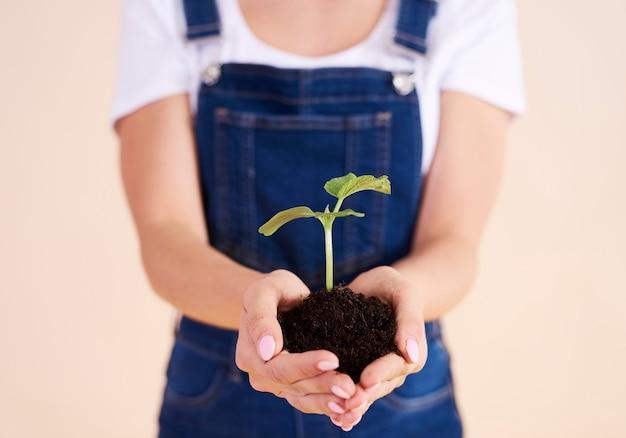 Primo piano di una piccola pianta nelle mani