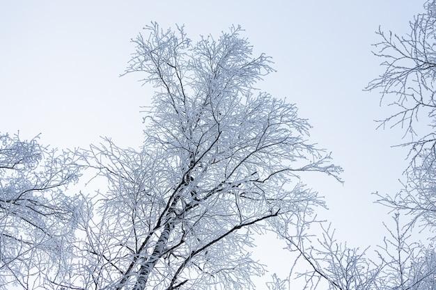 Primo piano di una cima coperta di neve di una betulla sotto una nevicata su uno sfondo