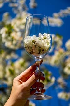 Chiuda su fondo vago molle della mano della donna che tiene un vetro pieno del fiore del fiore di ciliegia o di sakura al parco della molla su un fondo del giorno soleggiato. viaggio romantico. festa della mamma o concetto del giorno della donna.