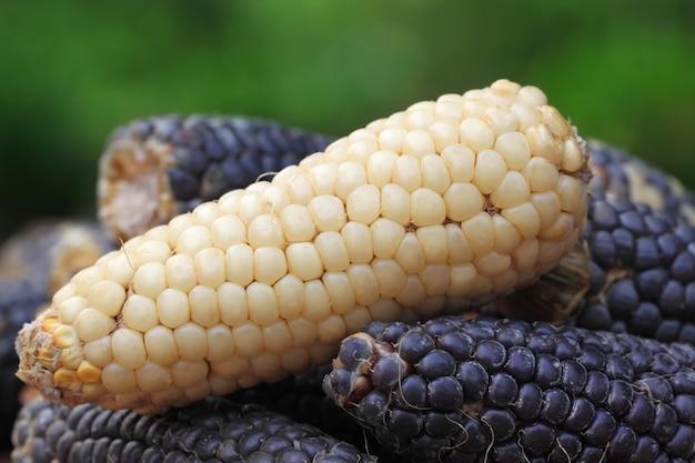 Primo piano di alcuni semi freschi sullo sfondo naturale