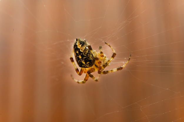 Primo piano di un ragno nel mezzo della sua tela.
