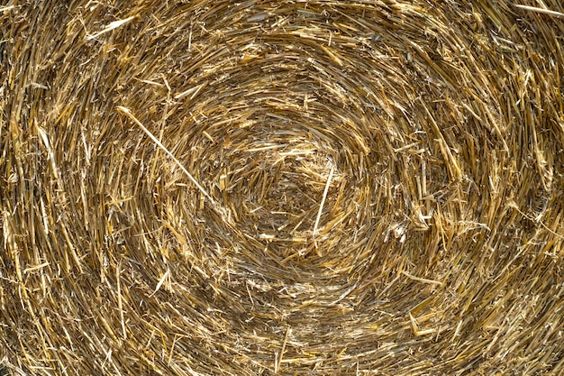 Primo piano della trama della paglia. arrotolato in un cerchio di fieno. concetto di agricoltura