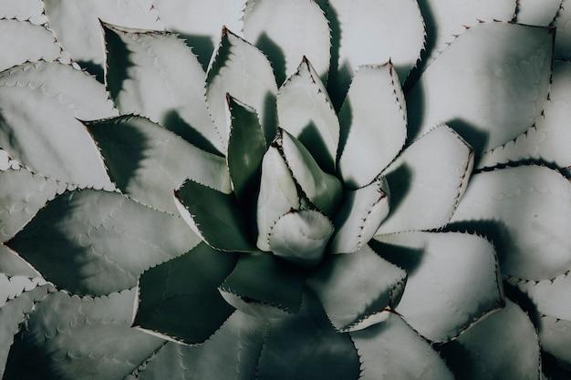 Primo piano di una succulenta in un deserto