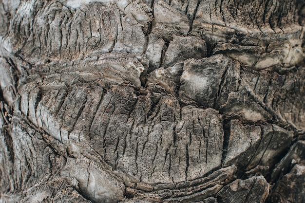 Chiudere la superficie della corteccia di palma