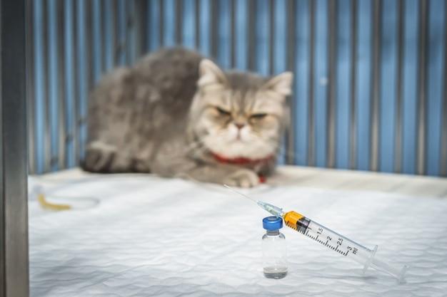 Stretta di siringa e fiale con gatto scottish fold seduto in gabbia