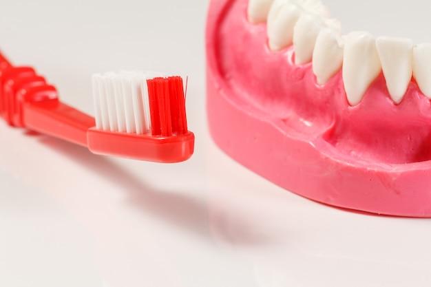 Primo piano uno spazzolino da denti e una disposizione della mascella umana sullo sfondo bianco. profondità di campo.
