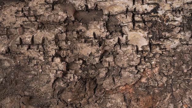 Close up tree texture per carta da parati o sfondo.