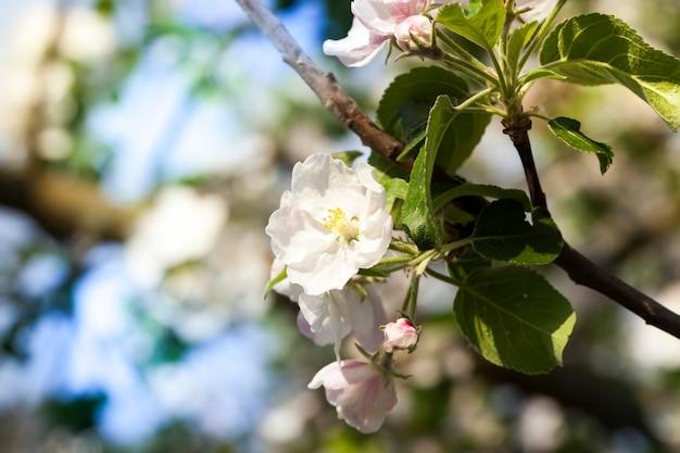 Primo piano sugli alberi del frutteto