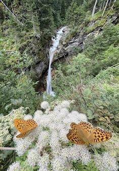 Primo piano di due farfalle su un fiore vicino a una cascata in austria