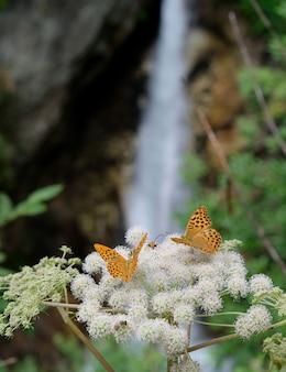 Primo piano di due farfalle su un fiore