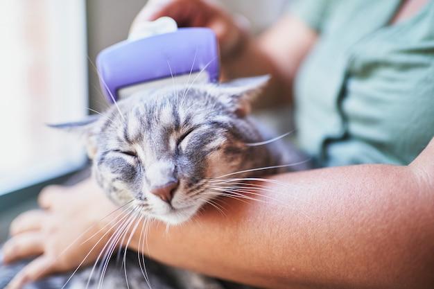 Primo piano di una donna irriconoscibile che spazzola i capelli del suo gatto