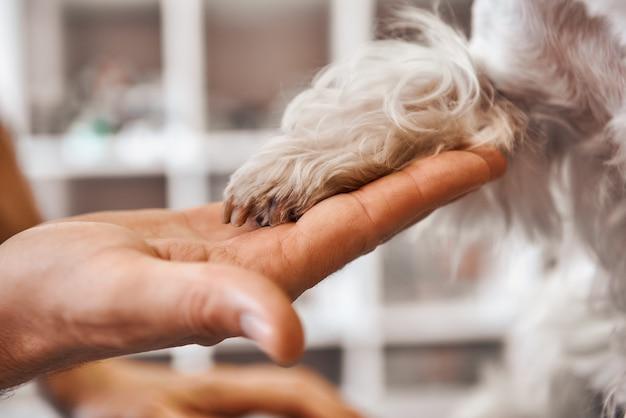 Primo piano della mano del veterinario che tiene la zampa del cane presso la clinica veterinaria