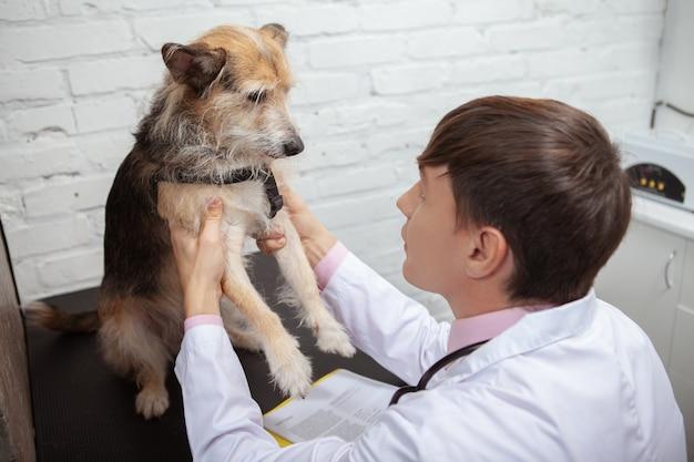 Primo piano di un veterinario esaminando zampe e arti di un simpatico cane di razza mista nella sua clinica
