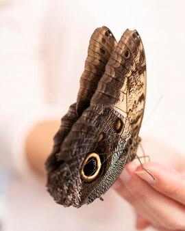 Vista ravvicinata della bellissima farfalla a portata di mano