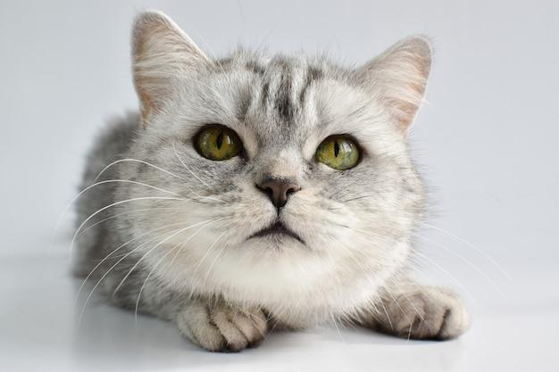 Una vista ravvicinata di un gatto su una superficie bianca