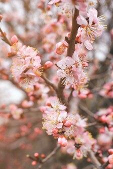 Vista ravvicinata sui rami di ciliegio con fiori su sfondo sfocato verticale.