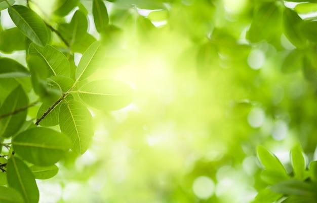 Vista ravvicinata della foglia verde sul verde sfondo sfocato e luce solare in giardino utilizzando per pianta verde naturale